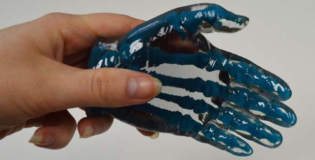 Anatomical model of hand